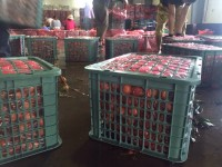 Chuyên cung cấp rổ xoài to 30kg Phú Hòa an